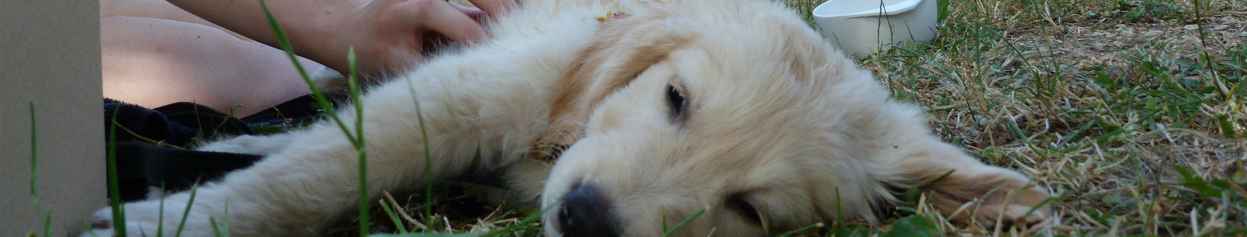 Séance chiot à la clinique vétérinaire de Bar-sur-Seine