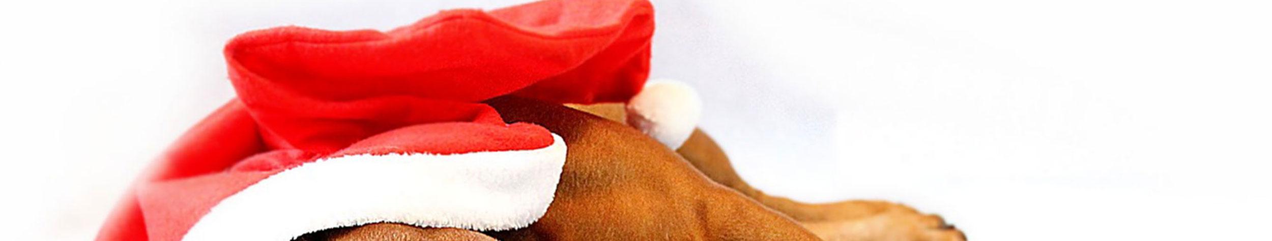 Jeu-Concours Noël !