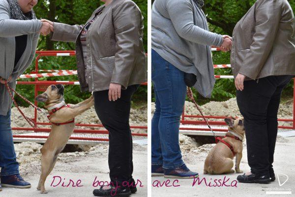 Mycleverdog-séancecollectiveAuxerre-direbonjour-Misska