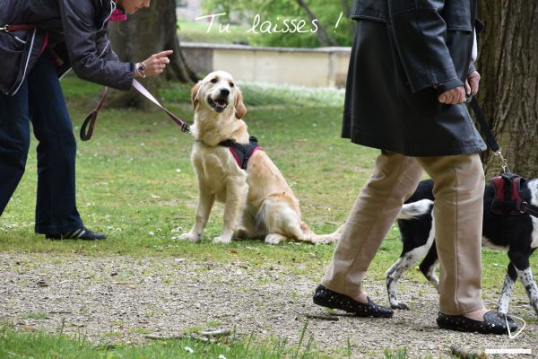 Mycleverdog-séancecollectiveAuxerre-tulaisses-happy3