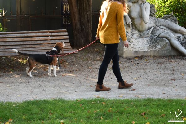 Mycleverdog-séanceurbaine-Necko-marcheenlaisse