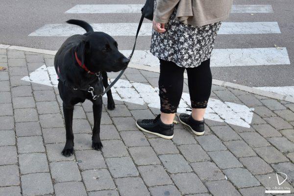 Mycleverdog-séanceurbaine-Nesquik2
